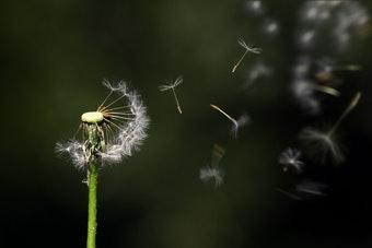 Je n'arrive pas à méditer : ennui, inconfort, omniprésence du mental…